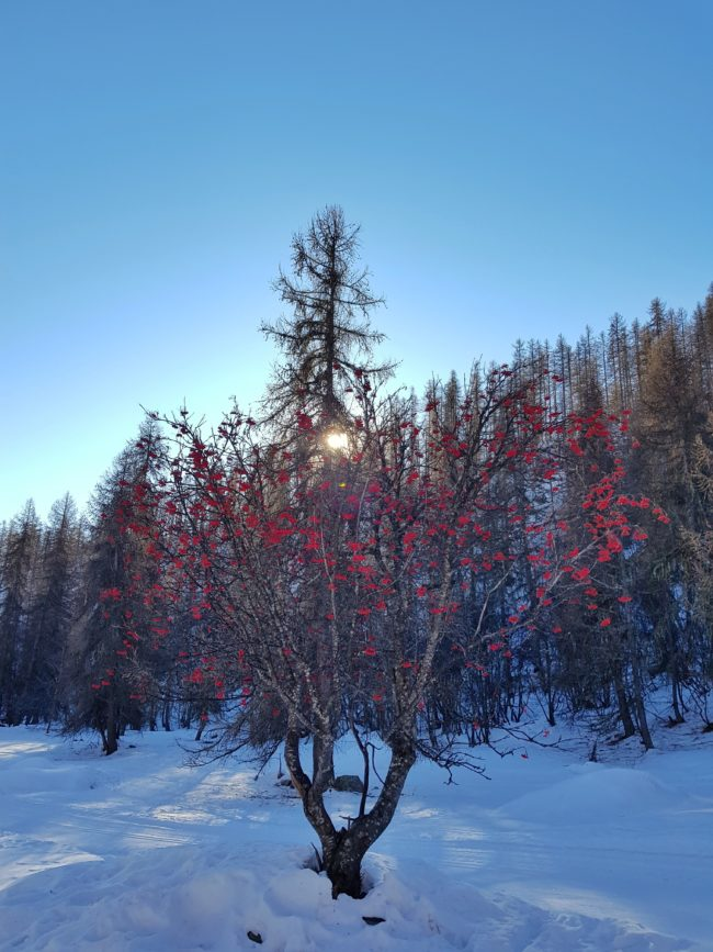 Sur le chemin en pleine montagne, dans la neige