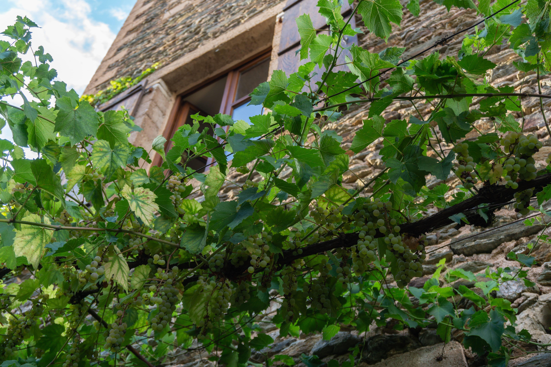 vigne dans le village Conques