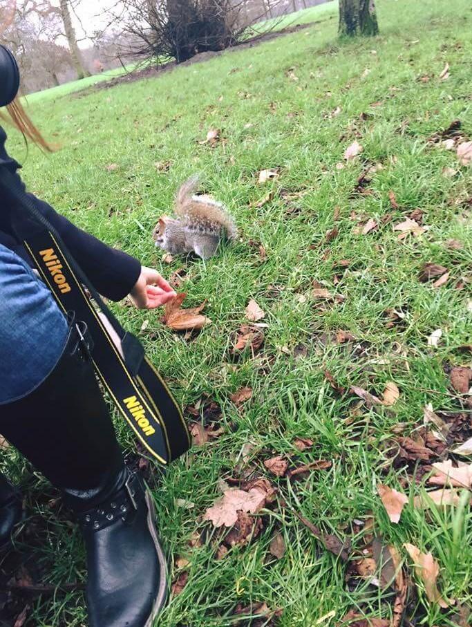 meeri wild park london squirrel