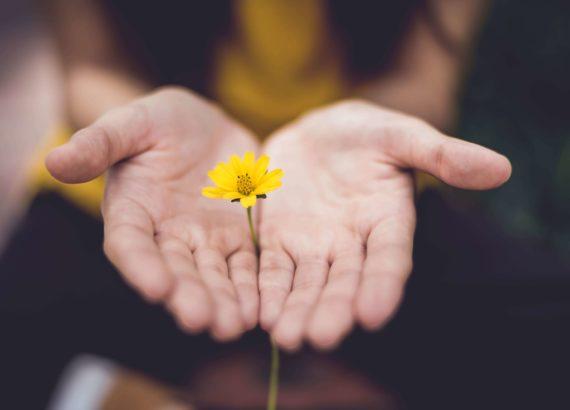 mains fleur jaune trésor