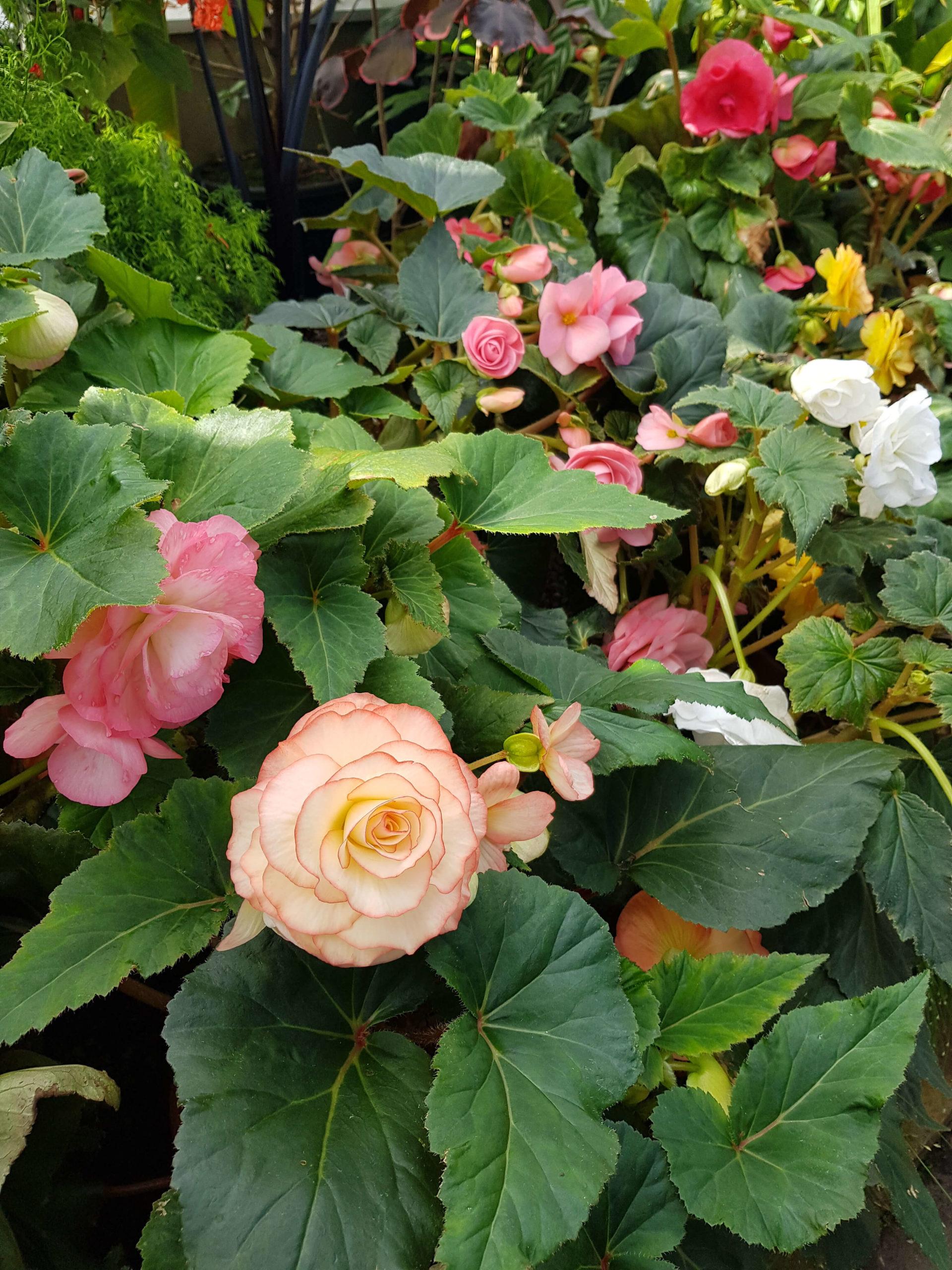 Fleurs serre tropicale jardin botanique Dunedin