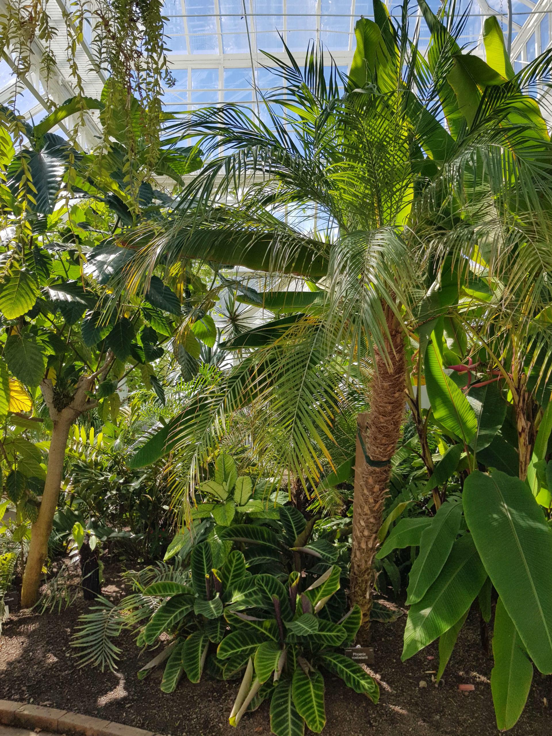 Serre tropicale jardin botanique Dunedin